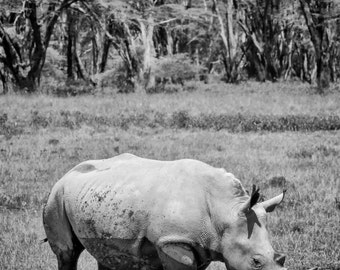 White Rhino photo - A4 fine art print - 14 x 11 inch Mount - rhino - nature photography - african wildlife - rhino mounted print