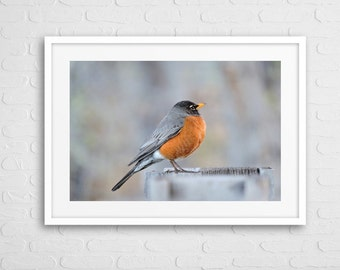 Little Robin Art Photo With Frame