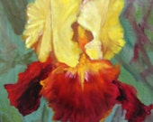 Golden Iris  Miniature oil on canvas Barbara Haviland BarbsGarden