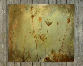 Nature Art, Photograph, Botanical, Zen Art Print, Soft Colors, Queen Annes, Field - Symphony Of Nature