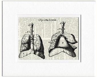 Lungs dictionary page print