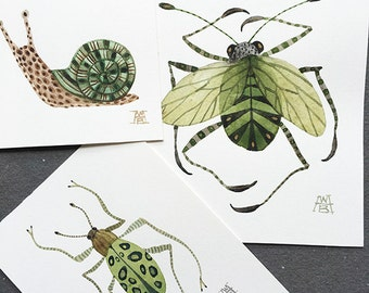 Viridis Insect Collection, miniature small watercolor paintings, set of three