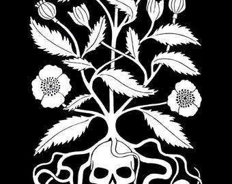 Opium Poppy Art Print