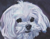 Maltese dog portrait art Canvas PRINT of LAShepard painting 12x12""