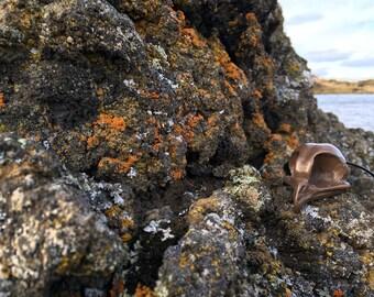 Light Bronze Cold Cast Owl Skull Pendant