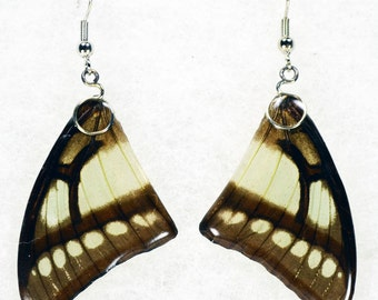 Real Butterfly Earrings - Polyura Narcaea - Hand Cast Resin