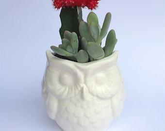 Ceramic Owl Planter - Medium White