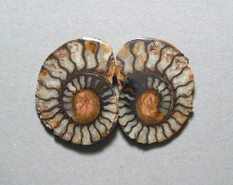 fossil pyritized AMMONITE cabochons matching pair two 28X37mm designer cabs