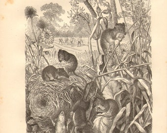 1877 Harvest Mouse - Micromys minutus Original Antique Engraving