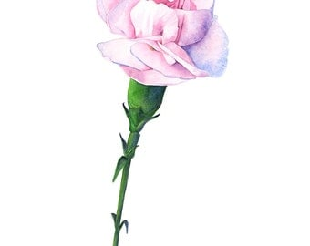 Carnations print of watercolor painting, C12116, 5 by 7, carnation and bee watercolor painting, carnation watercolour painting, botanical