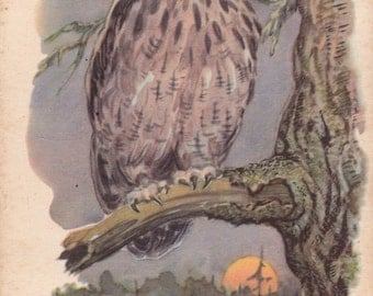 "V. Frolov ""Owl"" Postcard -- 1959. Condition 9/10"