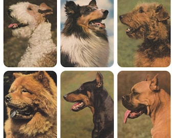 Dogs. Set of 11 Vintage German Photo Postcards -- 1970?