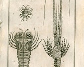 1802  Crustaceans Antique Print  Latreille, Buffon Lobster