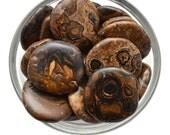 1 XL STROMATOLITE Palm Stone Brown Jasper Tumbled Stone aka Fossilised Stromatolite Tumbled Stone Jewelry & Crafts #FL1