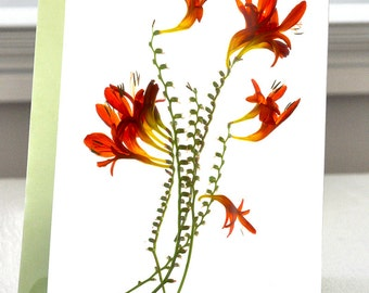 Greeting Card Note Card hand made Flower Red Sharons Reds Dance