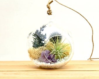 Air Plant Terrarium Kit with Purple Amethyst Crystal / Shabby Chic