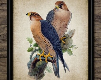 Falcon Print - Falcon Bird Of Prey Illustration - Falconry Bird Decor - Digital Art - Printable Art - Single Print #228 - INSTANT DOWNLOAD