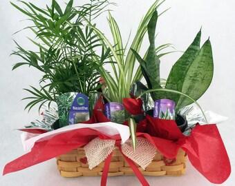 "Parlor Palm, Spider Plant, Snake Plant in Valentine Wicker Basket -10"" x 4"" x 3"""