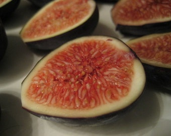 """Black Mission Edible Fig Plant - Ficus carica - Sweet - 4"""" Pot"""