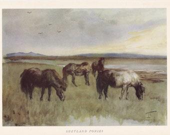 Shetland Ponies Horse horse vintage print Lionel Edwards native British breed working pony Scotland scottish