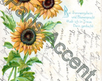 Vintage Sweetheart Postcard of Sunflowers, Circulated with a German Stamp 1907
