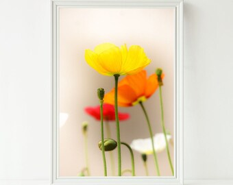Instant Digital Download Fine Art Flower Photography - Yellow, Orange, Red and White Poppies