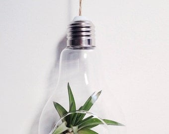 Air Plant Terrarium Lightbulb Kit with choice of sand colour or stones~ industrial decor Tillandsia customise personalise gift diy hanging