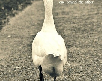 Fine Art Photography, Goose, words, soft colours, nostalgic, Dutch language, animal photography, photo combined with words.