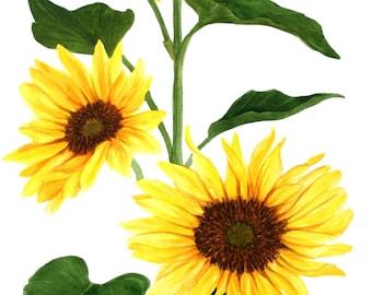 Sunflowers Original Watercolor 2' x 3' by Wanda Zuchowski-Schick