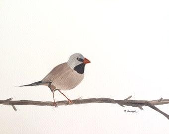Bird art finch art original watercolour painting 12 X 9 inches