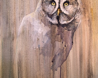Great Grey Owl Giclee Print