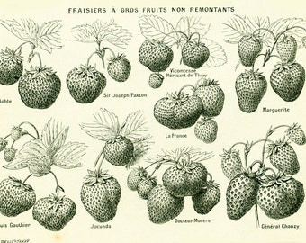 1922 Antique Strawberry Print, Vintage Fruits Vegetables Print, Kitchen decor illustration Larousse