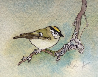 Art Card; Golden-crowned Kinglet