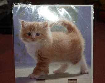 Fluffy Ginger Kitten Card