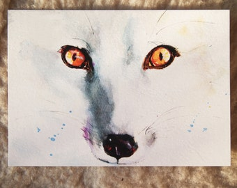 Close-up: Arctic fox