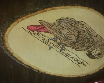 Grey parrot plaque Woodburned and colored