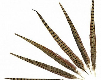 2 Pheasant Feathers - Male Tail Feathers - Natural Color