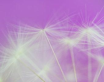 Dandelion photography instant download, wall home decor, dandelion art, spring photography, office art, violet photography, nature art