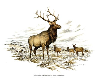 A large print of the American Elk painted by James Lockhart for the book Wild America. The bookplate is 15 inches wide and 12 inches tall.