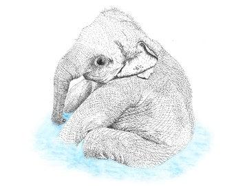 Baby Elephant - Original Illustration Print - Pointillism