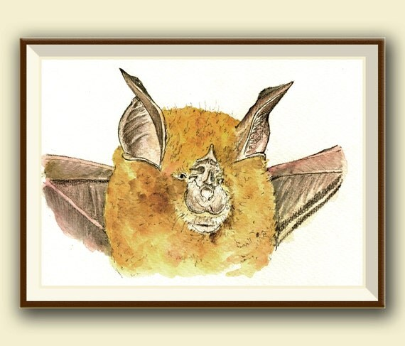 Rhinolophus Ferrumequinum Greater Horseshoe Bat Bat Art