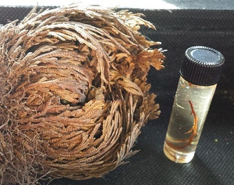 Rose of Jericho Oil-Money and Blessings