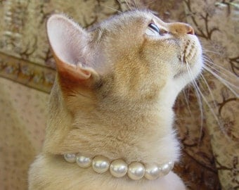 Pearl Cat Collar with Magnetic Safety Clasp
