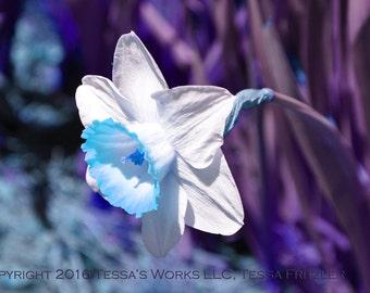 Blue Bell digital downloadable art