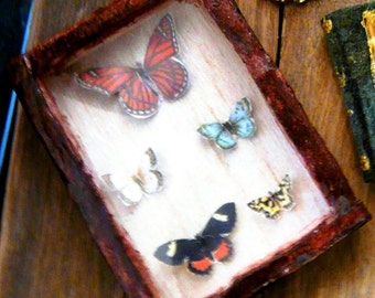 Dollhouse Miniature Taxidermy Butterflies 1:12 Dried Preserved Insects Display Case Butterfly Cabinet Vintage Botanist Explorer Dollshouse