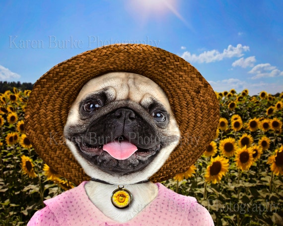 Funny Pug Print Sunflower Field Funny Dog By Abitofwhimsyshop