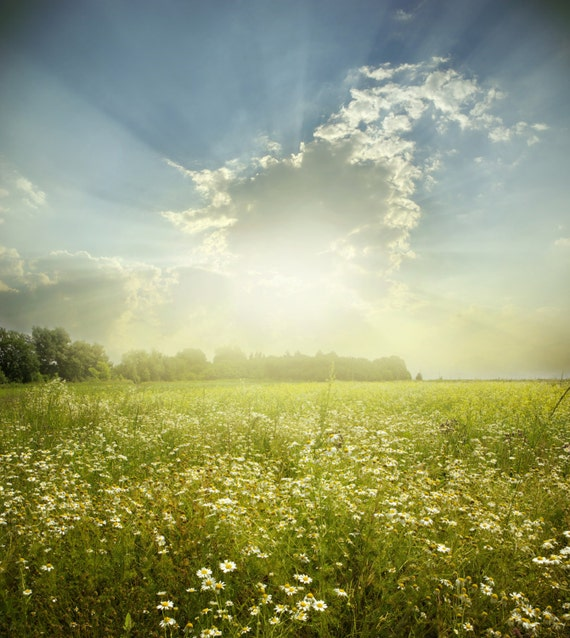 Spring Backdrop white flower farm land with sunshine