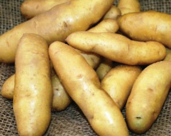 1 lb Peanut Fingerling SEED POTATOES