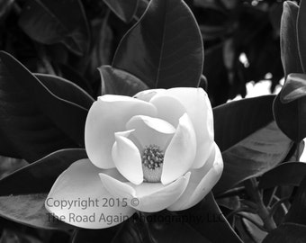 Magnolia Wall Art, South Carolina Photography, Southern Decor, Black & White Nature Photography, Floral Art Decor, Plantation Decor