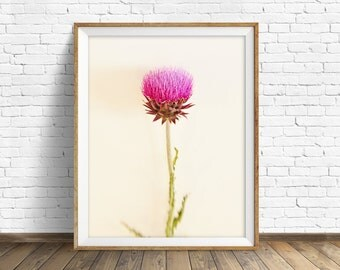 "thistle, fine art print, instant download art, printable art, photography, instant download, botanical print, pink, white -""Bashful Pink"""